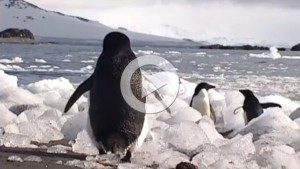 Funny ADHD Video | March of the ADHD Penguins