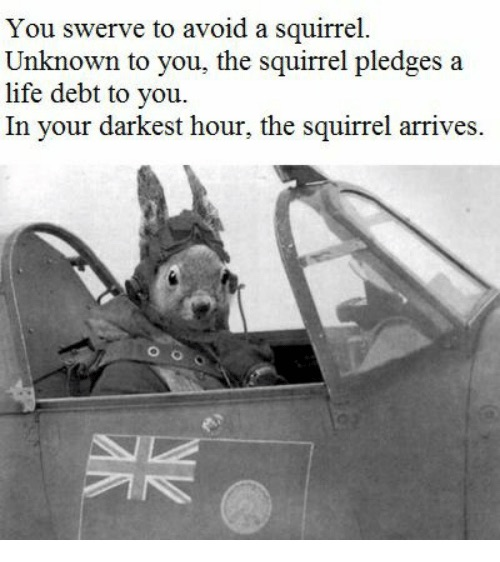 The unknown squirrel meme