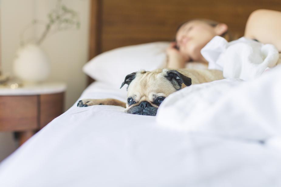 Teen sleeping in with pug