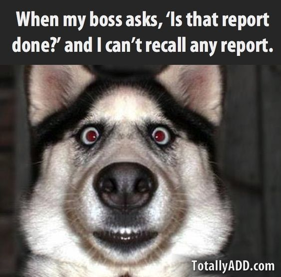 Meme about reports and work and accounting